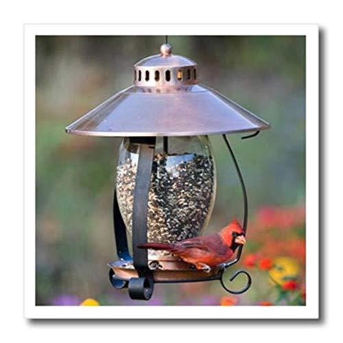 3dRose Northern Cardinal on Copper Lantern Hopper Bird Feeder, Marion Co. Il - アイロン熱転写 10x10インチ 白い素材用 (ht_208643_3)   B00USVDEEU