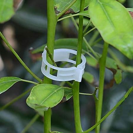 nulala - 50 Pinzas de sujeción para Plantas de jardín, para unir ...