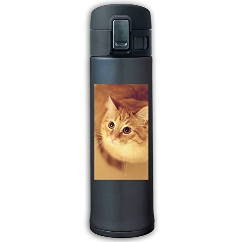 PTSocks Stainless Steel Water Bottle Orange Cat Travel Mug, 17 Oz, Navy