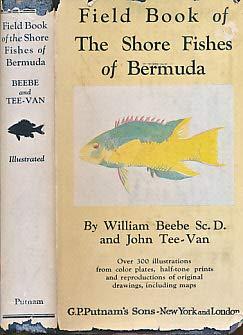 Fish Bermuda - Field Book of the Shore Fishes of Bermuda
