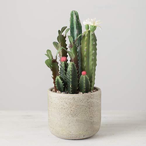 Best garden plant -Cactus