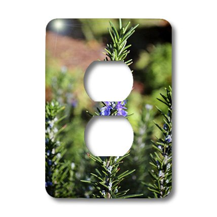 3dRose lsp_38062_6 Two Plug Outlet Cover with Flowering Rosemary (Spike Clock)