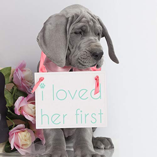 I Loved Her First Sign Dog Banner for Engagement Announcement or Bridal Portraits | Save The Date Prop for Puppy or Animal | Dog Mom | Aqua Blue Ink on White Paper with Pink Ribbon
