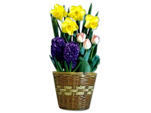 Wisconsinmade Flower Bulb Gift of The Month, Ships November Through April, 3 Months by Wisconsinmade
