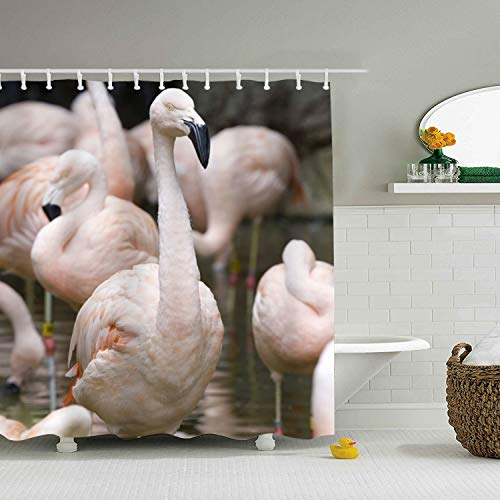 XPNiao Bathroom Shower Curtain Chilean Flamingo Zoo Atlanta Shower Curtains with 12 Hooks, Durable Waterproof Fabric Window Curtain()