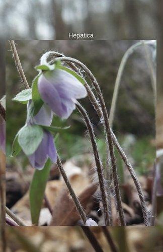 Hepatica: Journal (Wildflowers)