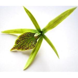 """(24) Green Hawaiian Cymbidium Cattleya Silk Flower Heads - 4"""" - Artificial Flowers Heads Fabric Floral Supplies Wholesale Lot for Wedding Flowers Accessories Make Bridal Hair Clips Headbands Dress 90"""