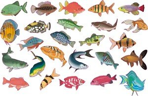 smarts art 25 x tropical fish tile transfers stickers full colour print 5 each