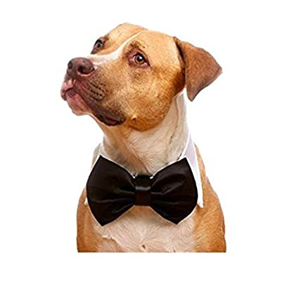 951ef05123c5 Buy That Dog In Tuxedo Tux Dog Bow Tie Collar (White, m) Online at ...