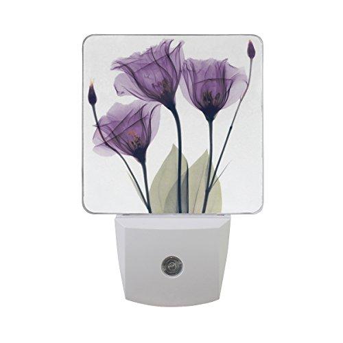 Plug-in LED Night Light Lamp with Light Sensor, Lavender Hope Flowers Daylight White, Purple, 2-pack