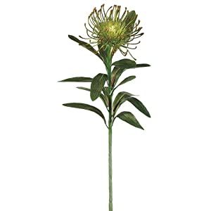"28"" Plastic Protea Spray x1 Green (Pack of 12) 7"