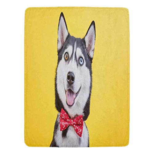 InterestPrint Funny Husky Breed Dog Ultra-Soft Micro Fleece Winter Warm Throw Blanket for Bed Couch 60 x 80 -