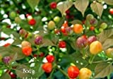 "1000 BODE Hot Pepper Seeds - A tiny pepper from Brazil ""VERRY HOT"" Fruity flavor"