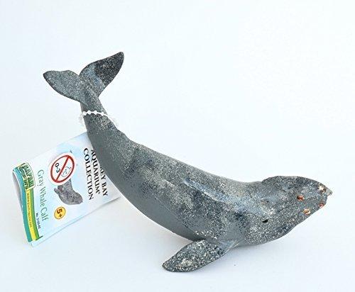- Monterey Bay: Gray Whale Calf