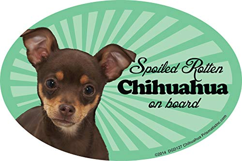 Prismatix Decal Chihuahua (Multi) Car Magnets: Spoiled Rotten Chihuahua (Multi) - Oval 6