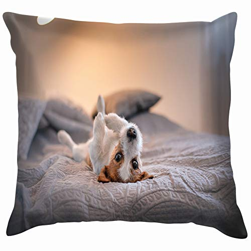 Cute Little Dog Jack Russell Terrier Animals Wildlife Nature Cotton Linen Home Decorative Throw Pillow Case Cushion Cover for Sofa Couch 12X12 Inch