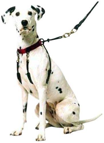Sporn mascota Halter, medio, rojo por Sporn mascota