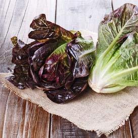 Cimmaron Romaine Lettuce Seeds, 1000+ Premium Organic Heirloom Seeds, (Isla's Garden Seeds), Non GMO, 85% Germination, Highest Quality!
