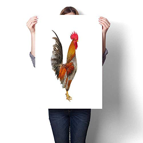 homehot Digitally Printed Rooster Isolated on White Background Decorative Fine Art Canvas Print Poster K 24