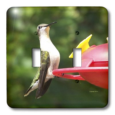 3dRose lsp_21071_2 Female Ruby Throated Hummingbird Double Toggle ()
