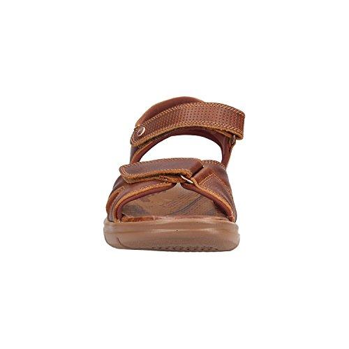 Napa Sanders Sandals Panama Brown Explorer Jack C1 fxXA5qEaw