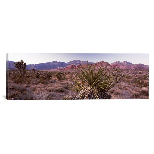 iCanvasART Yucca Plant in a Desert Red Rock Canyon, Las Vegas, Nevada, USA by Panoramic Images Canvas Art Print, 60 by 20-Inch