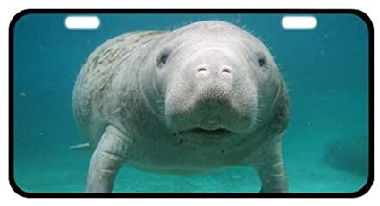 Manatee Novelty License Plate Decorative Front Plate 6.1 X 11.8