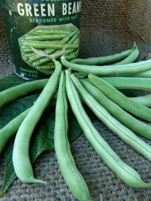 Organic Tendergreen Bush Bean 1/2 LB ~560 seeds