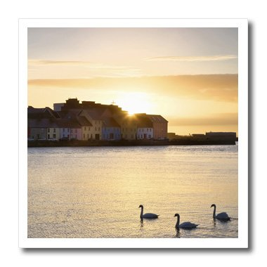 - 3dRose ht_81972_1 Ireland, Claddagh, Galway Bay, Swans, Sunrise-Jaynes Gallery-Iron on Heat Transfer for Material, 8 by 8-Inch, White