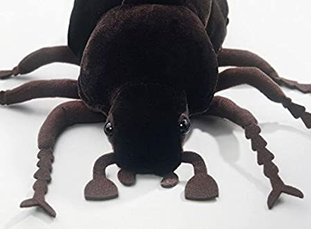 Amazon.com: Carl Dick Beetle brown, 10 inches, 25cm, Plush Toy, Soft Toy, Stuffed Animal 3335: Toys & Games