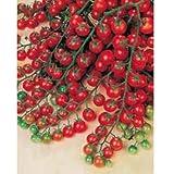 Sweet Million Cherry Tomato (Organic) Tomato 150 Seeds By Jays Seeds Upc 643451295290