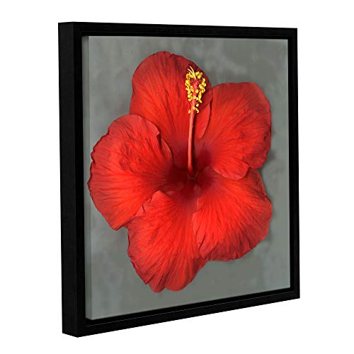 (ArtWall Susanna Shaposhnikova Hibiscus Gallery Wrapped Floater-Framed Canvas, 24x24 Inches, Wall)