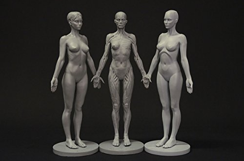 Female Anatomy Figure Collection: Planar, Ecorche and Skin - Anatomical Reference for Artists by 3dtotal