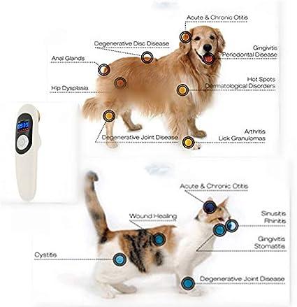 perro para tratamiento de prostatitis