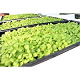 1020 Plant Trays without holes, 10 pack