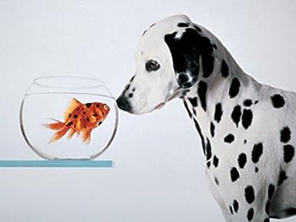 1art1 Dogs Poster Art Print - Dalmatian
