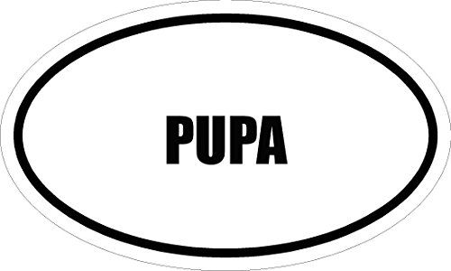 6-printed-pupa-name-oval-euro-style-magnet-for-any-metal-surface