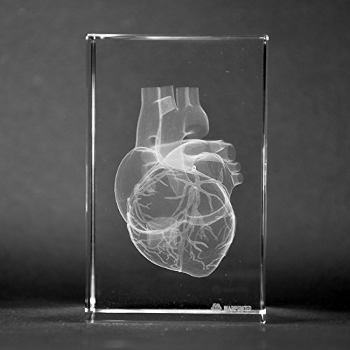 Crystal 3D Human Heart with Coronary Artery 1lb 2 x 2 x 3 Inches Optical Glass ()
