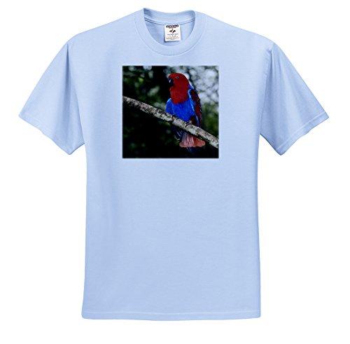 - 3dRose Danita Delimont - Tropical Birds - Papua New Guinea, Eclectus Parrot, tropical bird - OC12 BFR0002 - Bernard Friel - T-Shirts - Adult Light-Blue-T-Shirt XL (ts_84952_53)