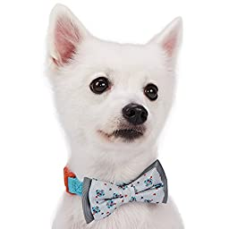 Blueberry Pet Gift Box with Pack of 2 Handmade Bow Tie, Go for Fun Designer Bowtie Set, Pet Bows Accessories for Dogs & Cats