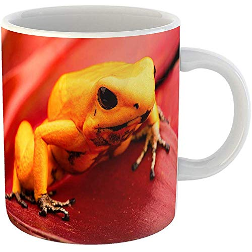 Coffee Tea Mug Gift 11 Oz Funny Ceramic Poison Dart Frog Phyllobates Terribilis Deadly Animal From the Tropical Amazon Gifts For Family Friends Coworkers Boss Mug