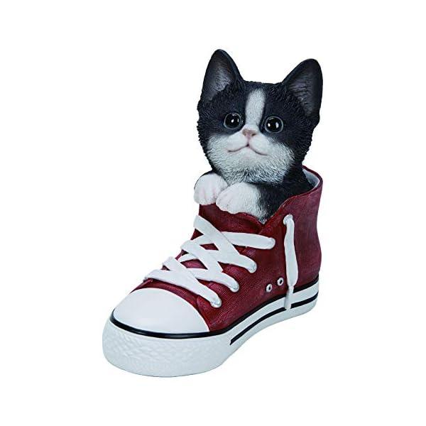 gato en blanco y negro dormir mascota Pals Vivid arts