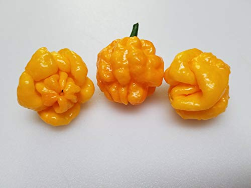 Scotch Bonnet Pepper Plants - Plant Sweet Pepper