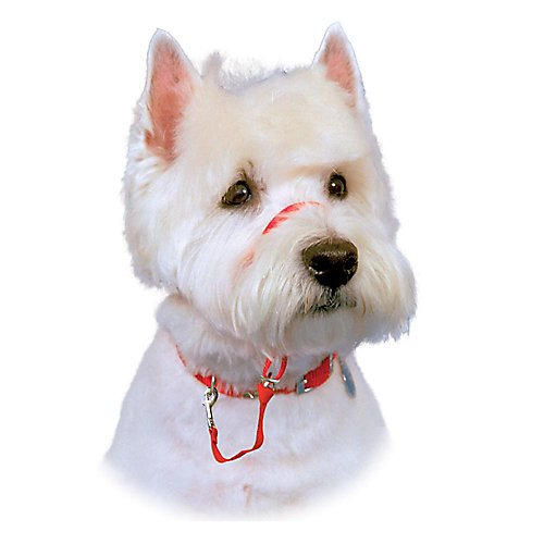The Company of Animals - HALTI Headcollar - Adjustable and Padded - No Pull Training Tool for Dogs on Walks - Includes Free Training Guide - Size 3 - Red