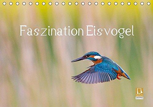 Faszination Eisvogel (Tischkalender 2018 DIN A5 quer): Zwölf außergewöhnliche Eisvogelporträts (Monatskalender, 14 Seiten ) (CALVENDO Tiere) [Kalender] [Nov 19, 2015] Martin, Wilfried