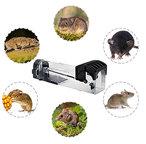 GoMaihe Plástico Transparente Trampas para Ratas, 3Pieza, Trampa ...