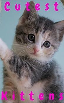 Cutest Kittens: 1500+ Picture Cutest Kittens Cats Photobook for Kids (BABY KITTENS Cats Dogs Cute Fluffy Animals For Children ,Cat Memes,cat photobook ... bybee,Cat School,Cutest Kitt 10)