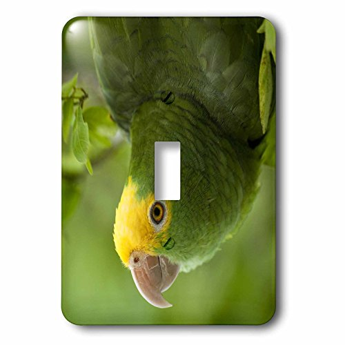 3dRose LLC lsp_85626_1 YellowHeaded Amazon Parrot, Tropical Bird, Belize Sa02 Pox0118 Pete Oxford Single Toggle Switch (Tropical Oxford)
