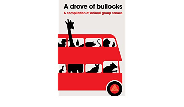 a drove of bullocks a compilation of animal group names