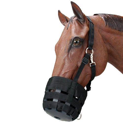 Horses Muzzle - 6
